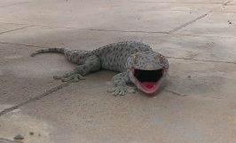 cropped lizard